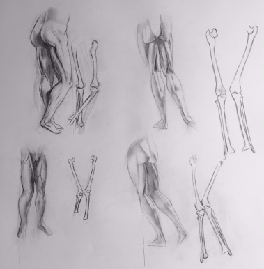 Life Drawing - Leg and Bone Study