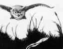 Krister-owl-ink-final