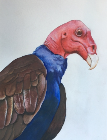 Turkey-Vulture-Watercolor-Krister-Eide